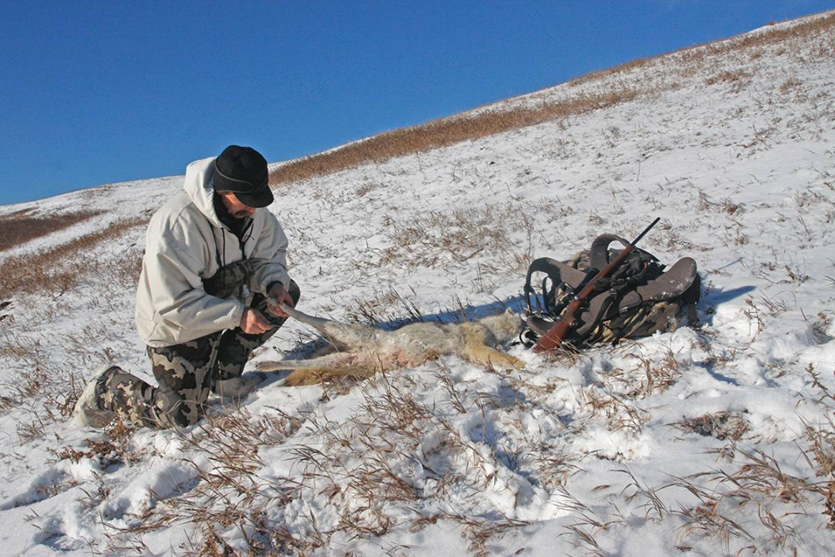 Predator hunters who are skilled at putting up fur can lighten their load by skinning animals on the fly, when the warm pelt is more easily removed.