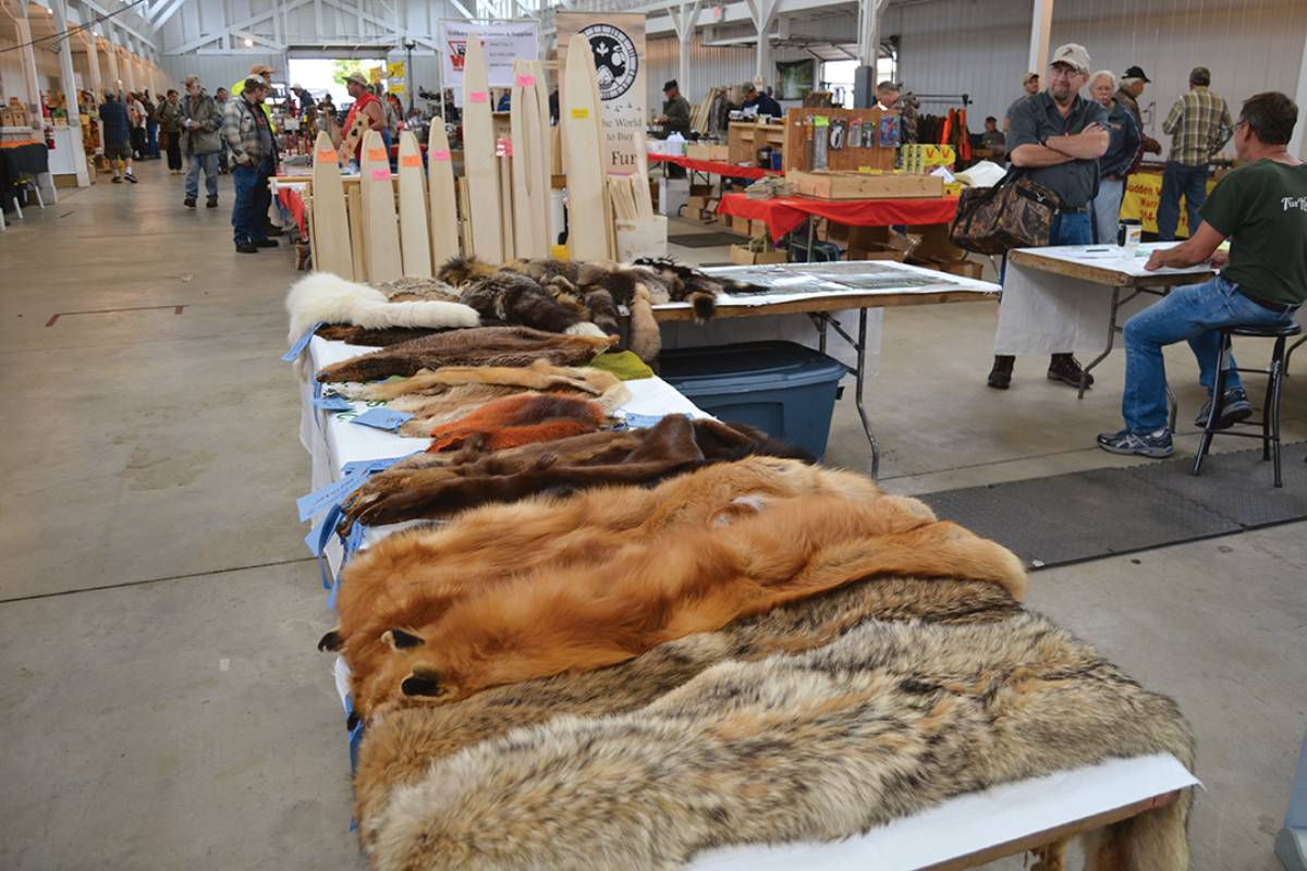 State trappers' associations host rendezvous, and some hold fur auctions each year. They can be a good outlet for gathering information about handling and marketing fur.