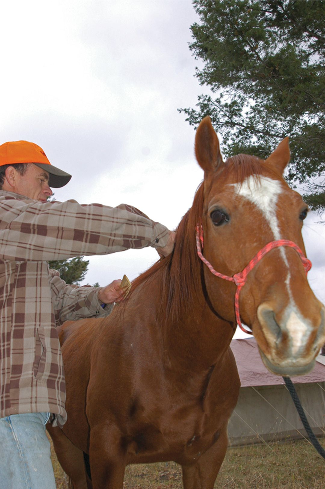 Handling and grooming give even a novice rider a good sense of a horse's disposition.