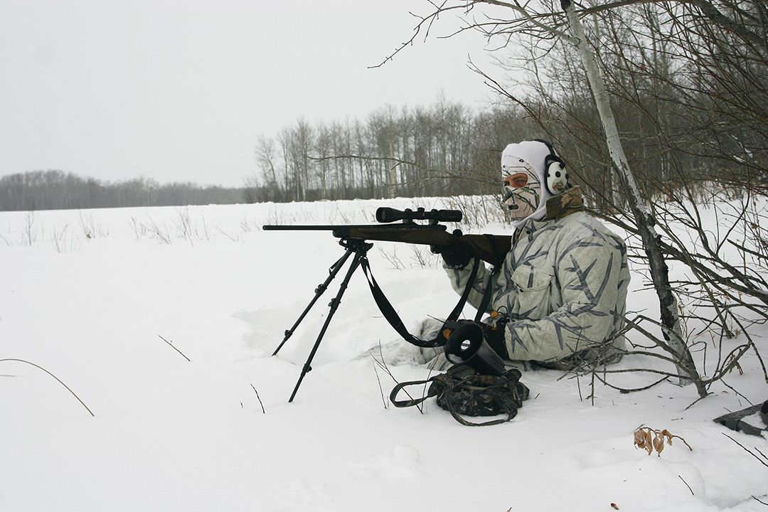 Predator hunters in snow-covered northern climates often drive around the countryside looking for red foxes sleeping out in the open. From there they either sneak in for the shot or get close enough to call.