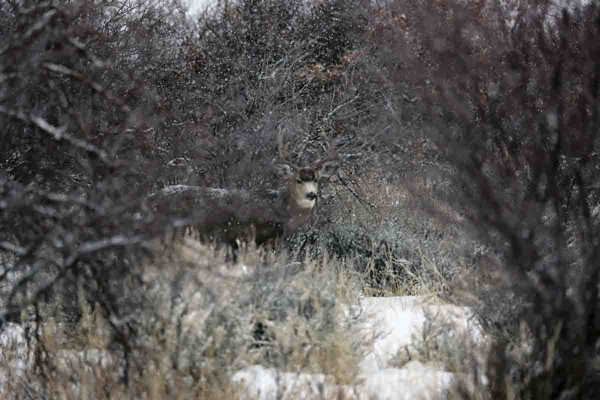 Big bucks know how to use terrain to stay well hidden along their travel routes.