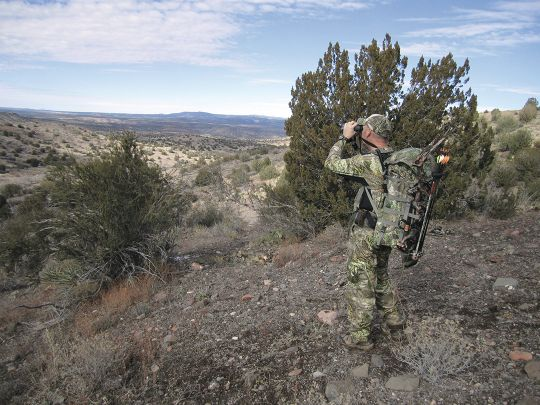 Scanning the rolling hills of northern Arizona is a great way to find both deer and javelina.