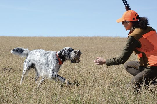 The usually annual pronghorn hunt affords time for bird hunting. Percy brings a sharptail grouse to hand.