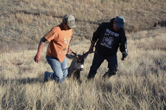 A pair of hunters drag out a heavy South Dakota buck shot in early afternoon.
