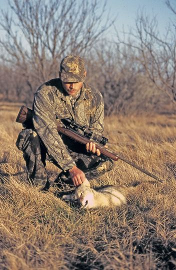 Since its inception in the late 1950s, the .223 Remington has been a perennial favorite of fur hunters for its accuracy potential and mild recoil.