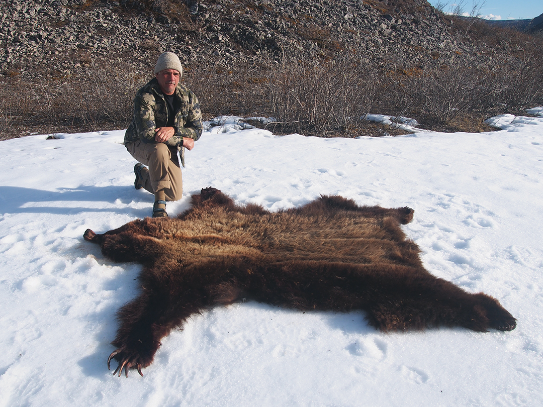 The bear's hide squared just over 8 feet.