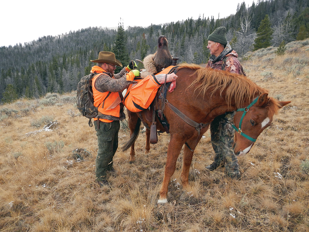 This bull was shot in early morning on the first weekend of elk season on a high slope. Hunters at lower elevations frequently move elk upward.
