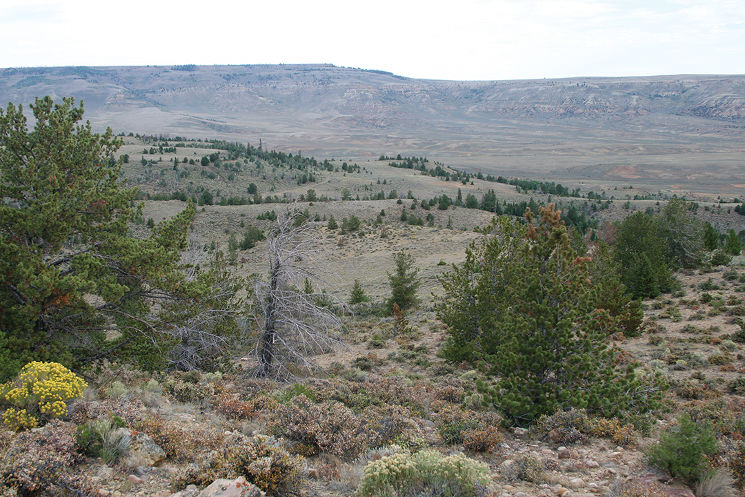 Much of the unit contained grass and sagebrush flats that lead up to pinyon/juniper hillsides and then deep timber and aspen pockets.