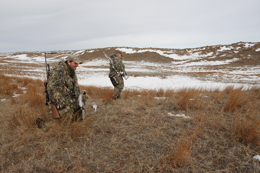 Decoys work most often when a coyote hunter has an idea as to the temperament of the dogs he's trying to work.
