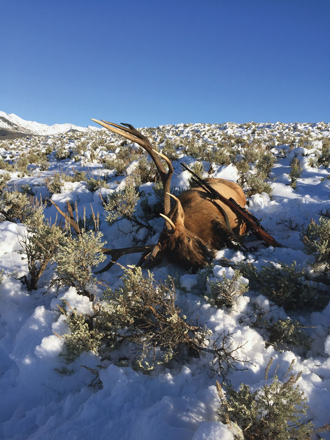 Patience for a good shot paid off with this dandy Colorado bull.