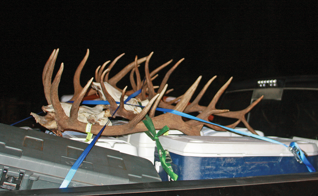 Other hunters in camp had a very successful elk-hunting trip that resulted in these good-looking racks and ice chests full of meat.