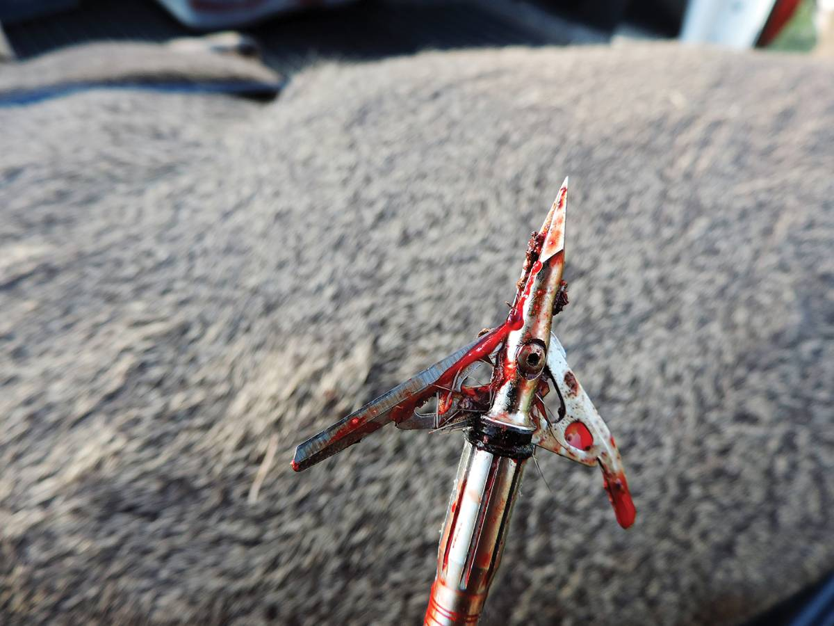 A well-placed Rage Hypodermic broadhead worked as expected.