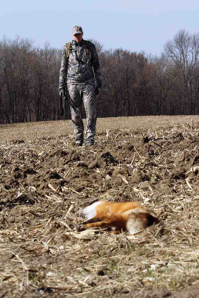 Predators such as red foxes are creatures of habit and often utilize the same areas year after year, as long as its resources remain consistent and hunting pressure doesn't drive them out.